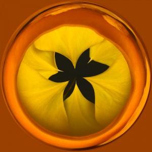 Flower inverted