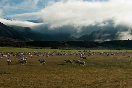 Mt Somers region