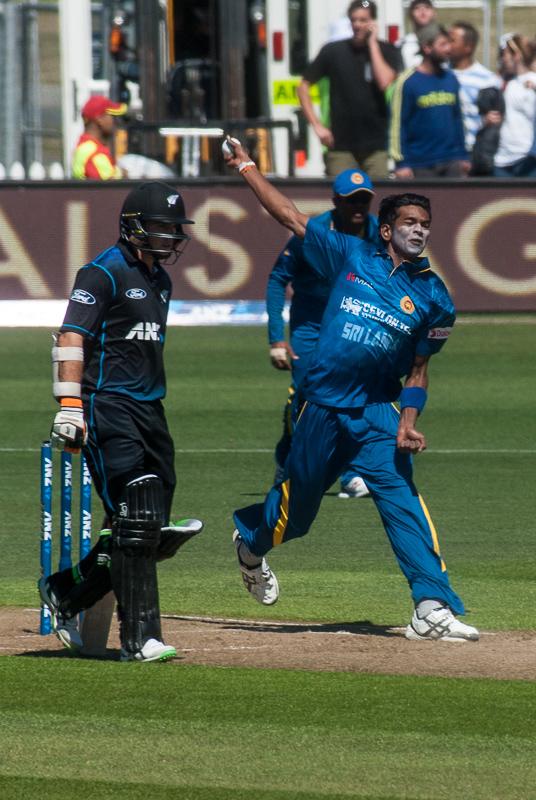 wpid5897-cricket-1.jpg