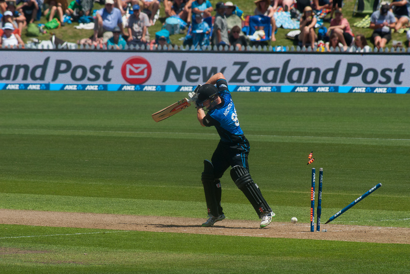 wpid5901-cricket-3.jpg